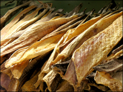 Codfish_(stockfish)